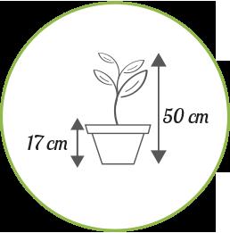 Rozmiar produktu - drzewkonaprezent