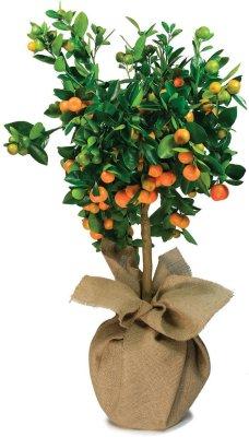 drzewko na prezent - slider