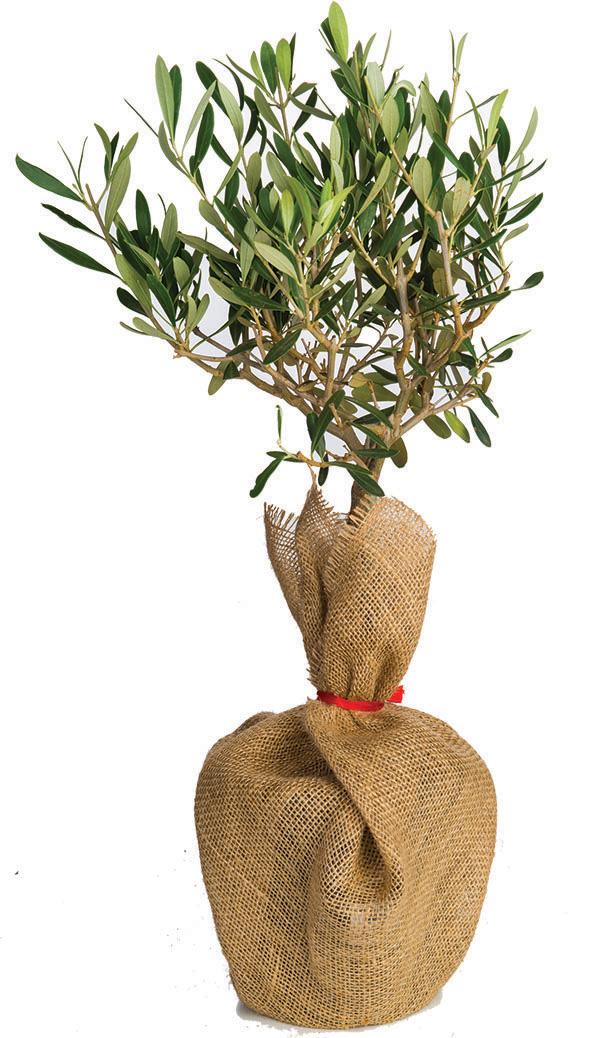 Zdjęcie produktu - drzewkonaprezent